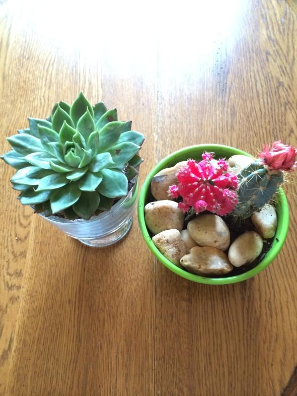 Cacti + Succulent